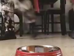 The ****Bowl - Mac's Make Water Pup